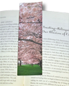 Bookmark, Cherry Blossoms, Portland, Oregon