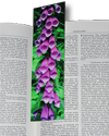 Bookmark, Foxglove , Neskowin, Oregon