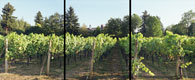 Afternoon Vineyard Triptych, Troutdale, Oregon